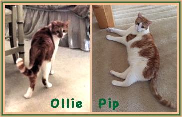 Ollie++Pip